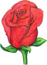 neufeld-leona-rose-on-bulletin